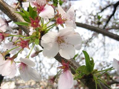 春は旅立ちの季節_c0049950_839512.jpg
