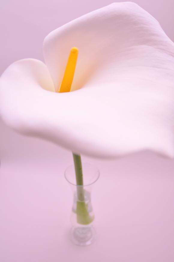 カラー ホワイトゴッデス