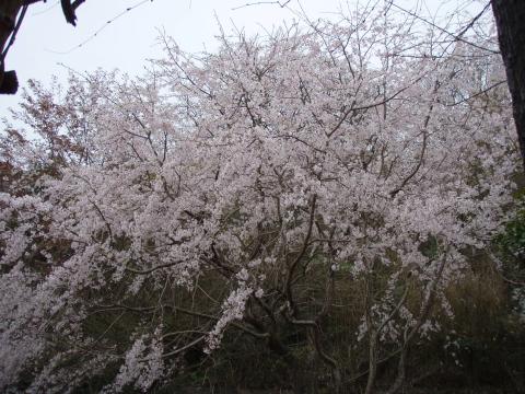 花見_a0077071_17442226.jpg