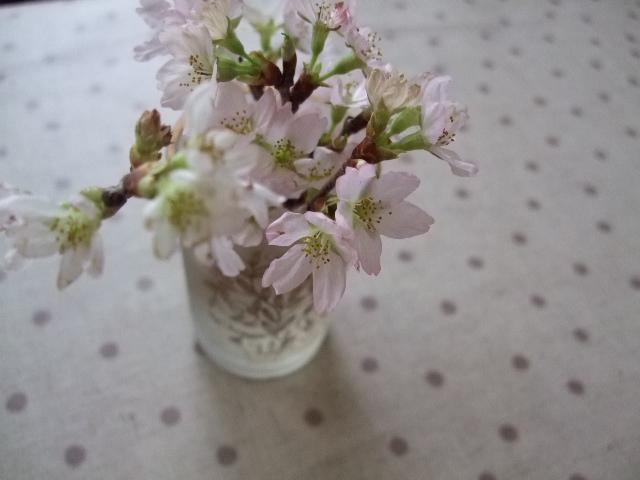 オークリーフ(桜の頃)_f0049672_11234238.jpg