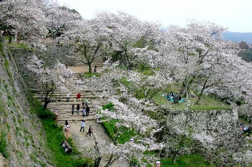 津山城跡、桜舞い散る石垣で (岡山)_b0067283_22233321.jpg