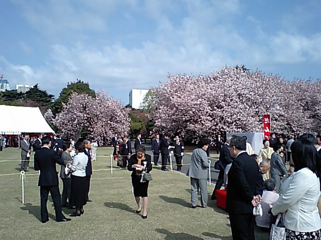 内閣府主催 平成20年度桜を見る会 東京で開催_d0027795_8375020.jpg