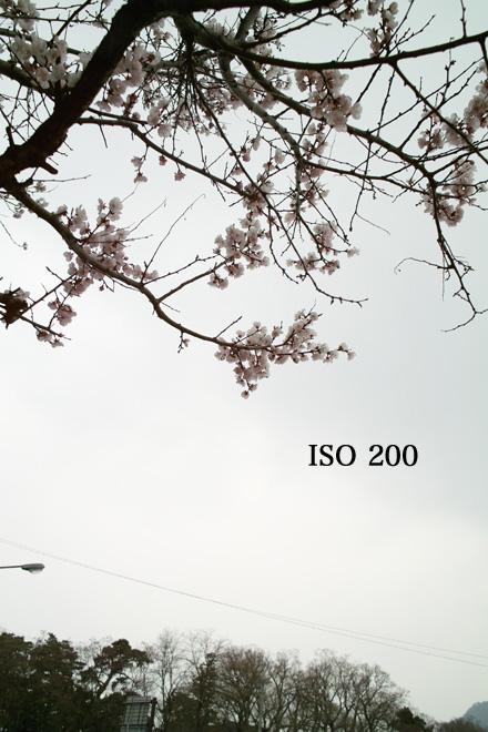 d0118803_2321697.jpg