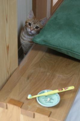 子猫、歯磨き練習中~その後_b0114004_20325734.jpg