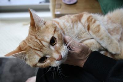 子猫、歯磨き練習中~その後_b0114004_20332475.jpg