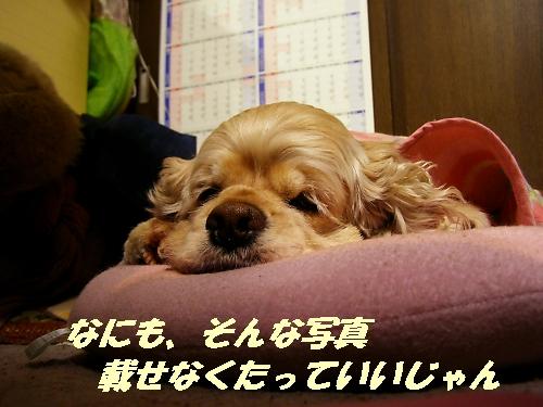b0067012_0522176.jpg