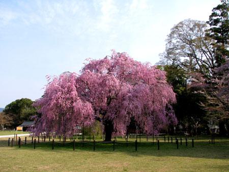 上賀茂神社1_e0048413_12201193.jpg