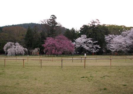 上賀茂神社1_e0048413_12244365.jpg