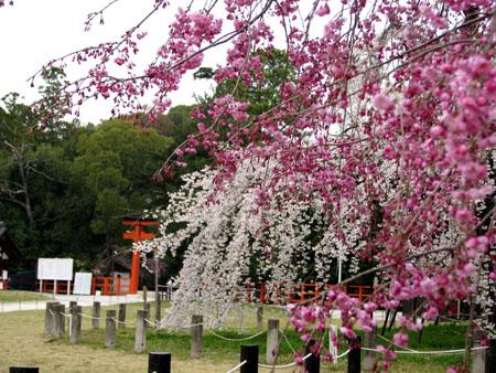 上賀茂神社1_e0048413_12252445.jpg