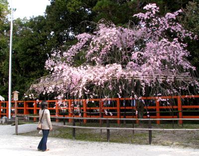上賀茂神社2_e0048413_13235446.jpg