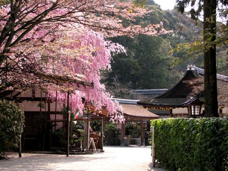 上賀茂神社2_e0048413_1325339.jpg