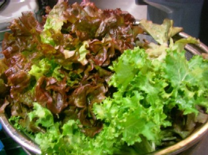 新鮮野菜_e0025817_19205962.jpg