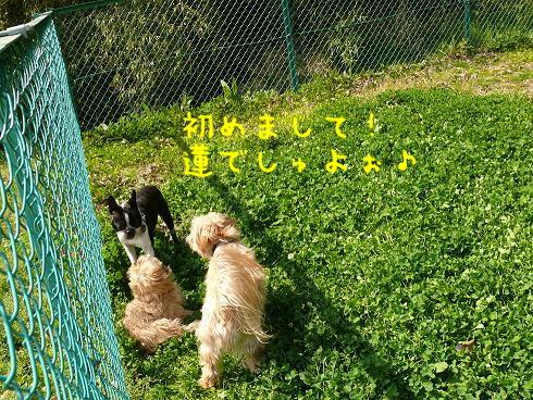 f0110861_15345821.jpg