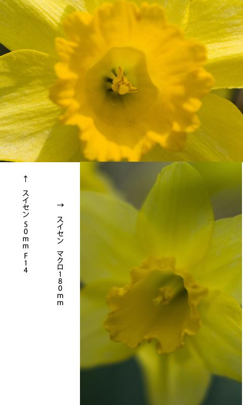 f0093285_1737145.jpg