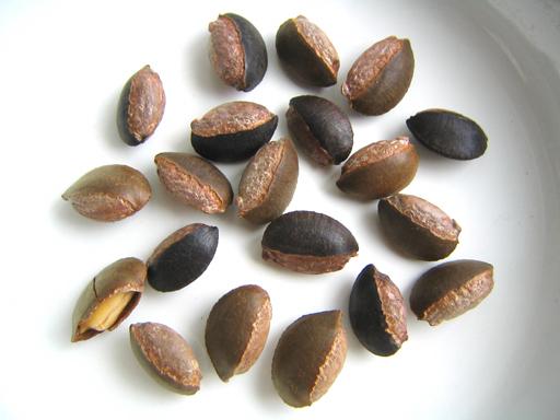 スターアップルの種子、star apple seeds