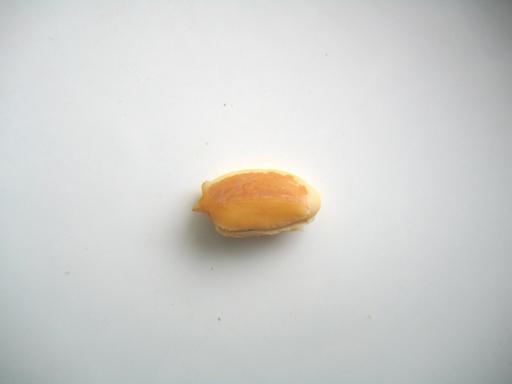 スターアップルの種子の殻を取ったところ、a star apple seed without the outer husk