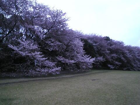 お花見2008 第四弾_b0129897_19493966.jpg