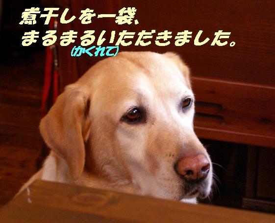 b0067012_16354676.jpg