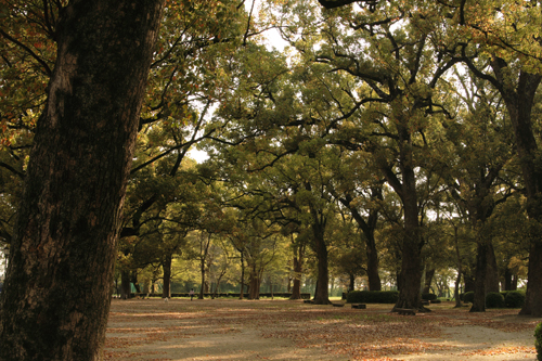 巨木の森_a0096313_19243976.jpg