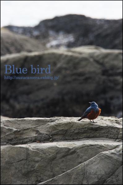 青い鳥_f0100215_2337510.jpg