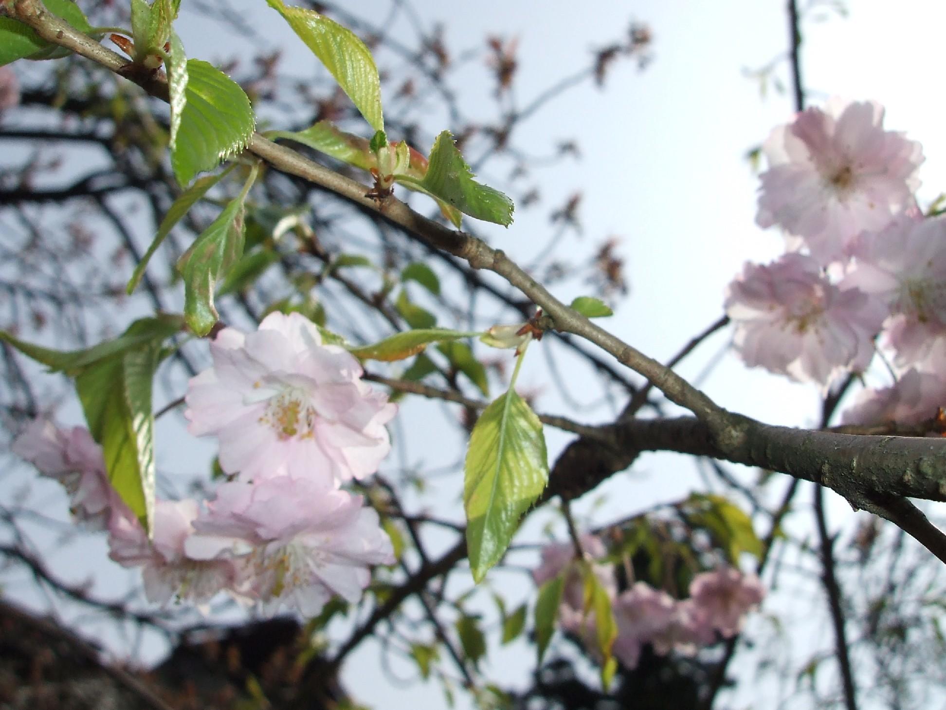次々と花が咲き始めました。_e0135219_15251425.jpg