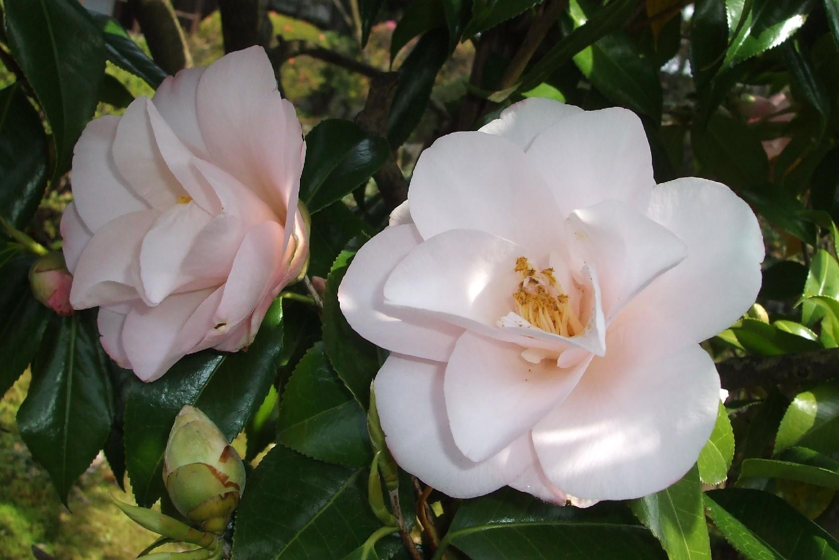 次々と花が咲き始めました。_e0135219_15255218.jpg
