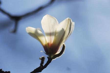 春の花たち_a0020021_2331290.jpg