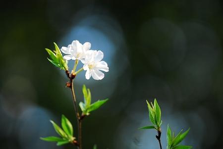 春の花たち_a0020021_2333892.jpg