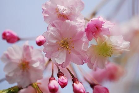 春の花たち_a0020021_2343494.jpg
