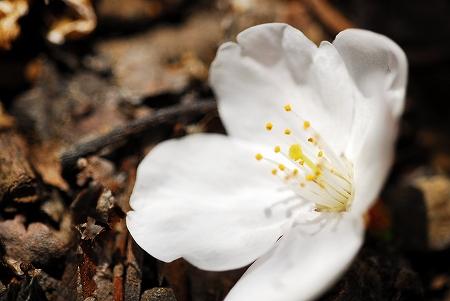 春の花たち_a0020021_234583.jpg