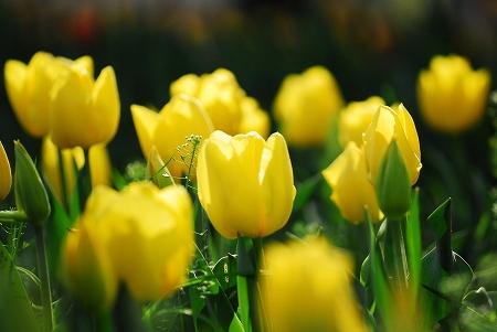 春の花たち_a0020021_23521.jpg