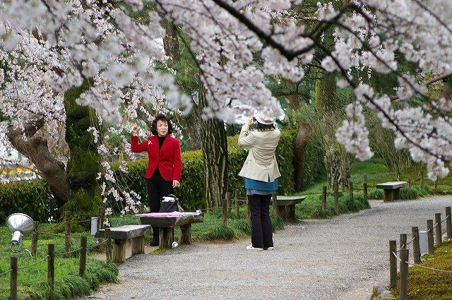 続・桜の兼六園~金沢 _d0043136_18351681.jpg