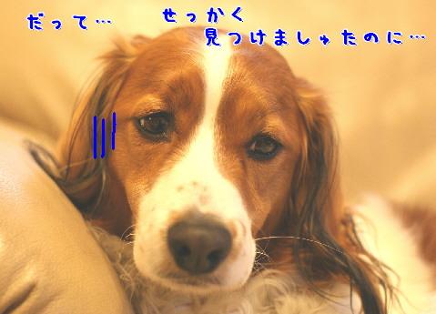 d0013149_7285965.jpg