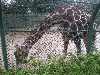 野毛山動物園  <横浜>  _c0118352_0515427.jpg