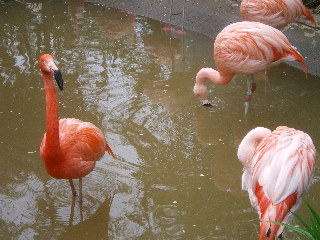 野毛山動物園  <横浜>  _c0118352_0522014.jpg