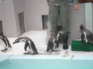 野毛山動物園  <横浜>  _c0118352_1455957.jpg