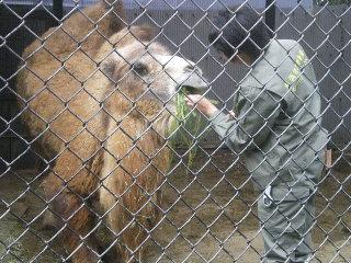 野毛山動物園  <横浜>  _c0118352_16564.jpg