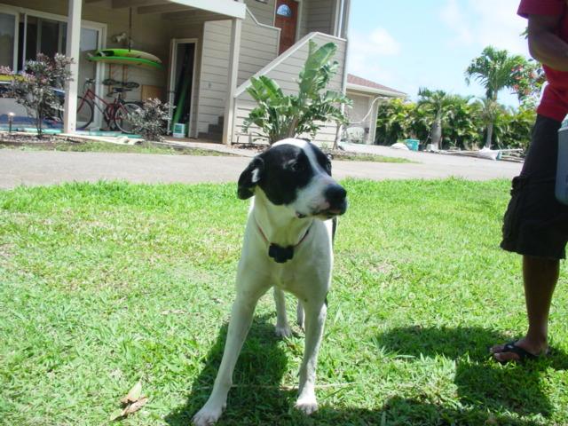 マウイの犬_d0143957_8135730.jpg