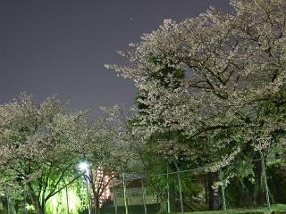 桜だより⑪尾崎川沿いの自衛隊夜桜_b0095061_105414.jpg