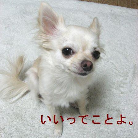 b0133861_2317554.jpg
