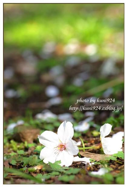 f0131365_1756577.jpg