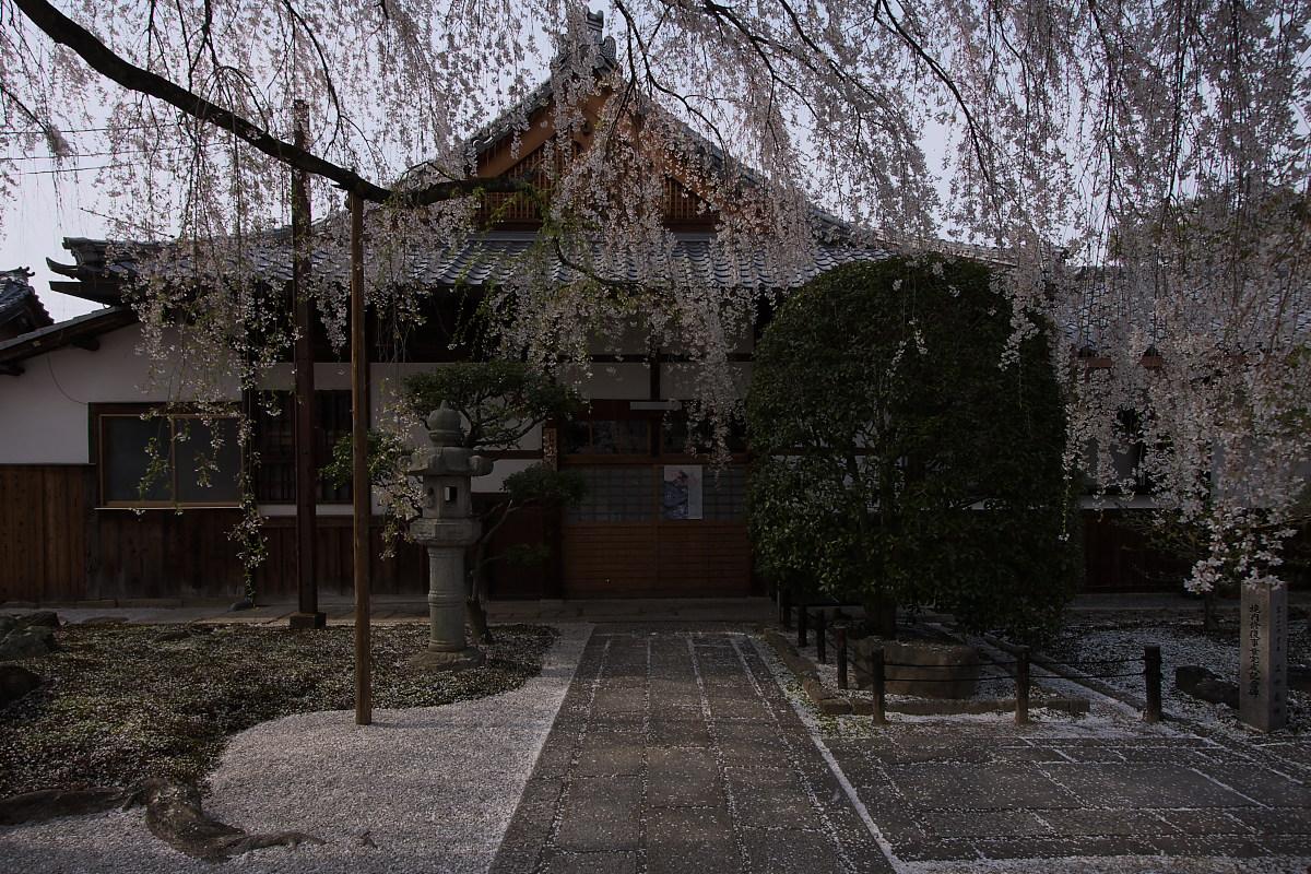京都 本満寺 枝垂れ桜_f0021869_2235028.jpg