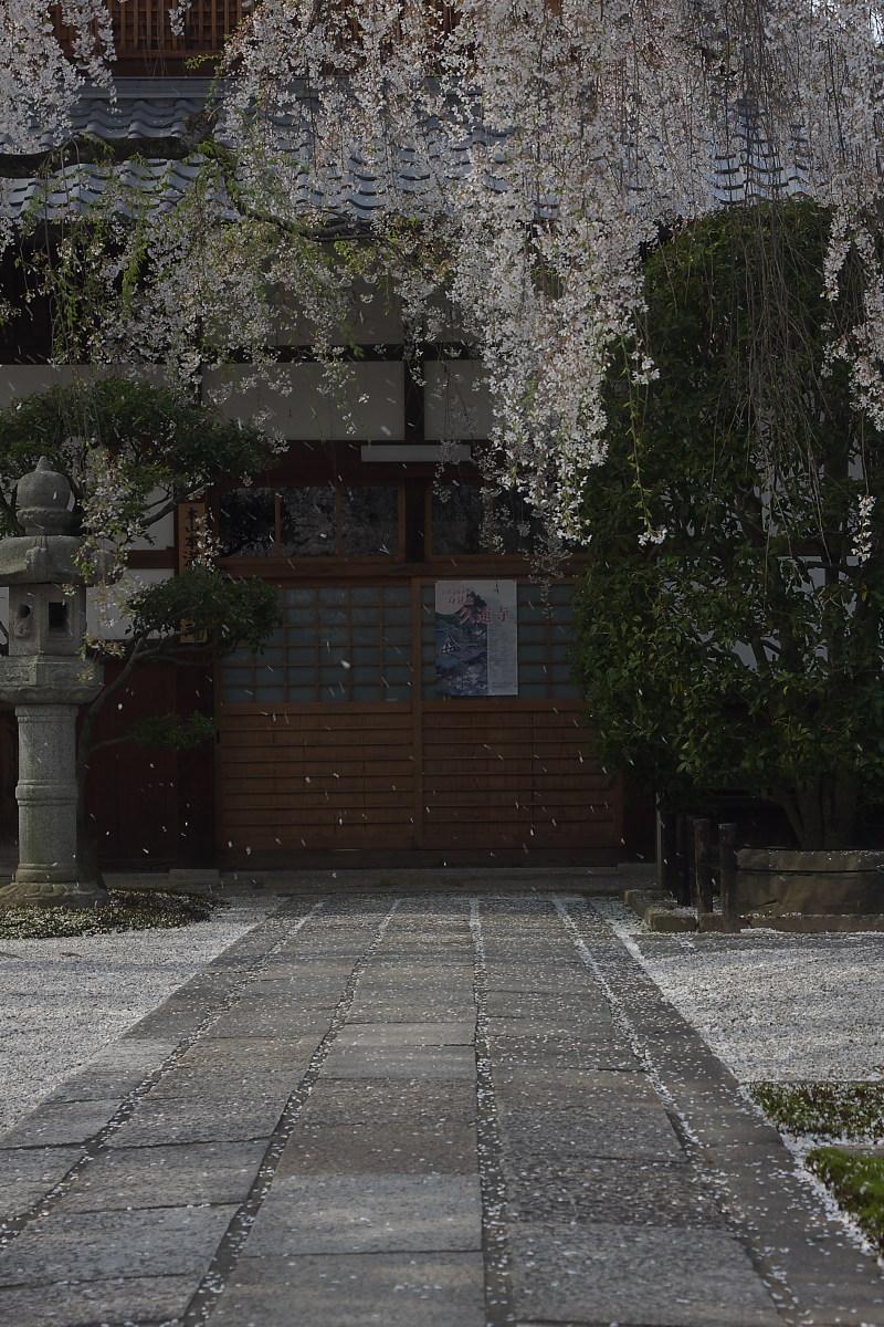 京都 本満寺 枝垂れ桜_f0021869_22425420.jpg