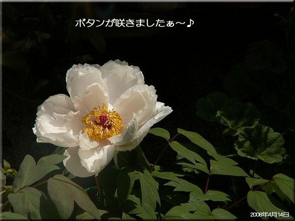 f0104569_235168.jpg