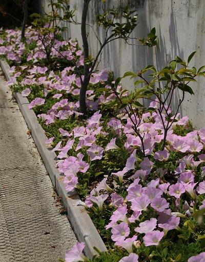 花壇のその後・・・・_d0030373_18324973.jpg