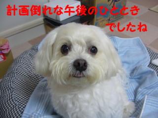 f0145192_16235267.jpg