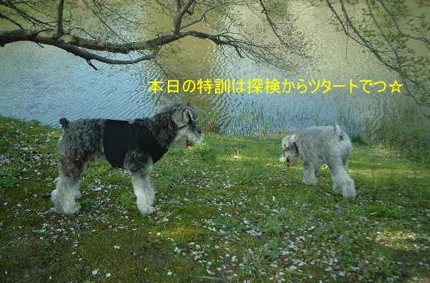 d0079701_19551240.jpg