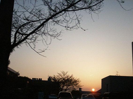 ■きのうの夕焼けと新芽_d0051613_14361590.jpg