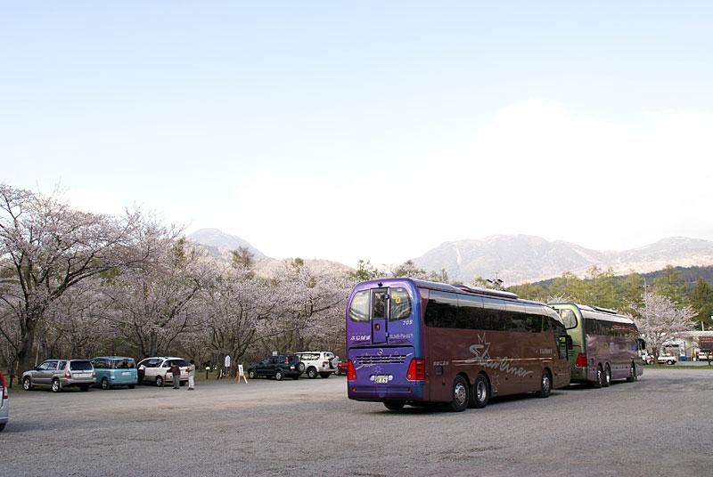 GWの蓼科は桜満開なのです_d0102327_246101.jpg
