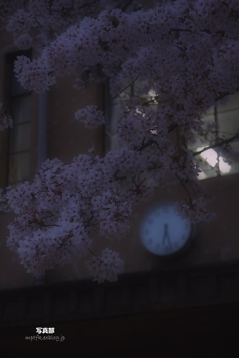 京都 立誠小学校と桜_f0021869_2144291.jpg